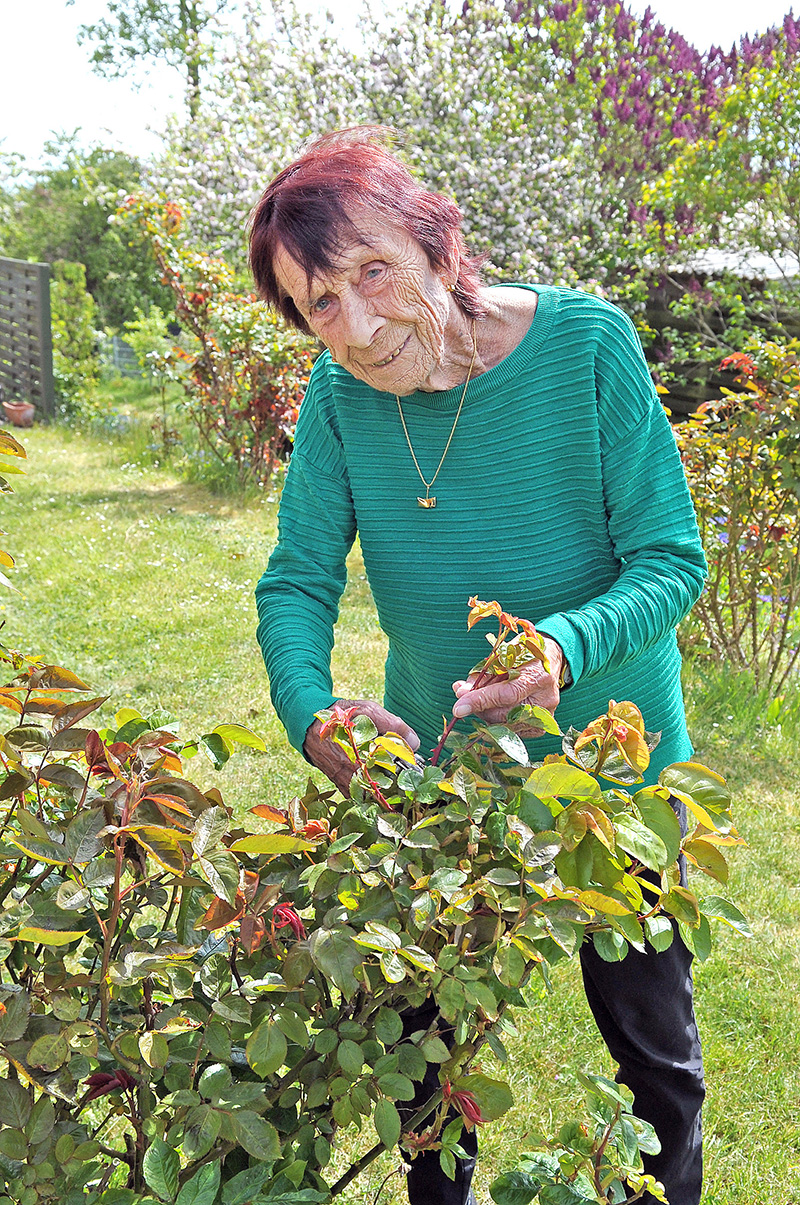 Helga Hansen passer selv sine roser. Græsslåningen  overlod hun til sin datter for tre år siden.